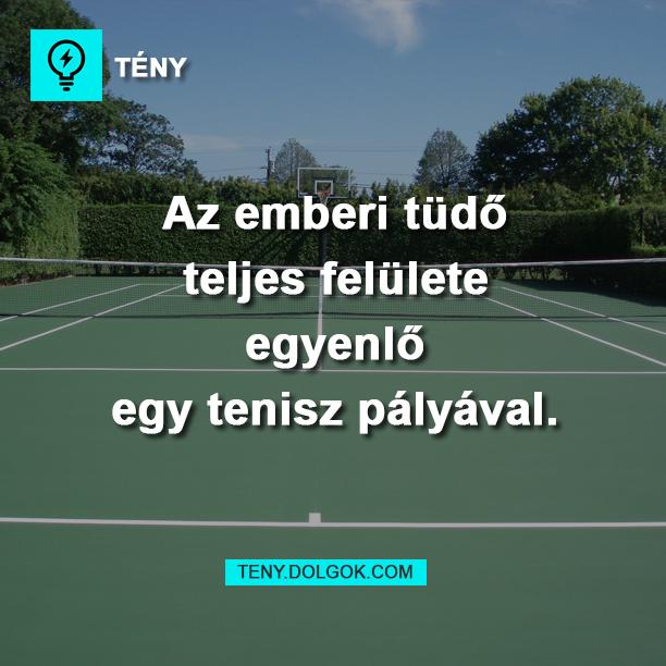 Az emberi tüdő teljes felülete egyenlő egy tenisz pályával