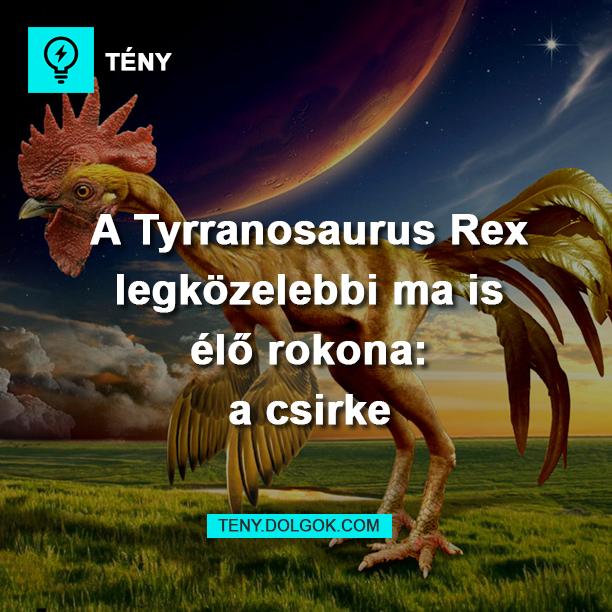 A Tyrannosaurus Rex legközelebbi ma is élő rokona a csirke