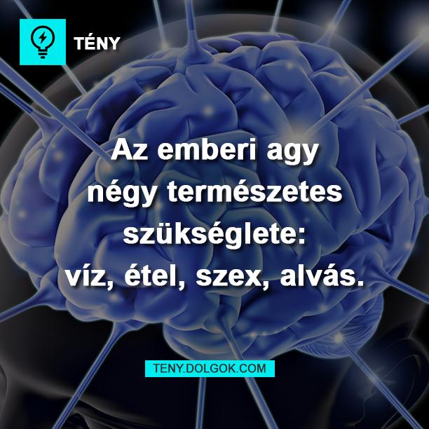 Az emberi agy négy természetes szükséglete: víz, étel, szex, alvás.